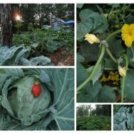 Garden Summer Garden